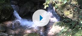 Imagevideo